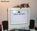 Cat On Desktop