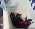 Cat Sleeping In The Bath Tub