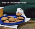 Rabbit Eating Cookies