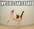 Cat On Invisible Skateboard