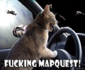 Space Driving Cat