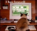 Cat Playing Solitaire