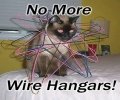 Wired Up Cat