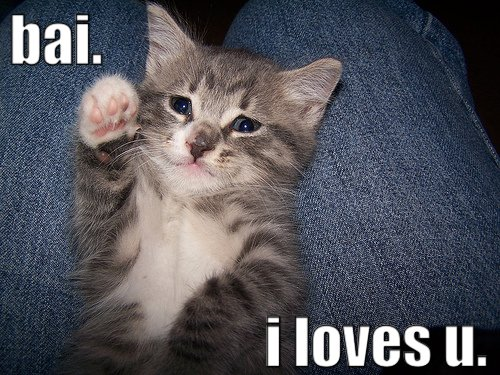 funny i love you photos. I Love You Cat - Funny Cats