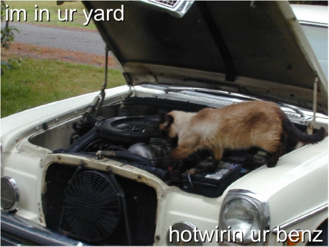 Cat Workin On Car