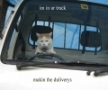 Cat Driving A Van