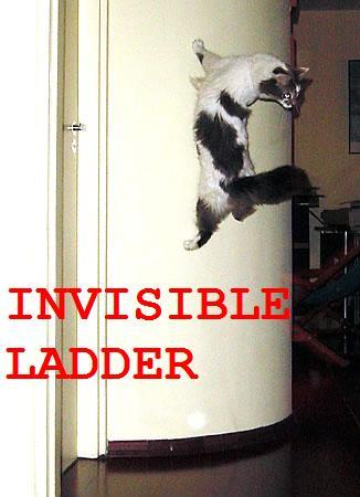 Cat On Invisible Leadder