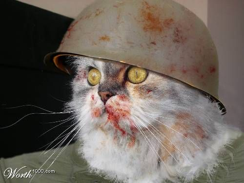 Cat On War