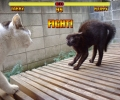 Mortal Kombat With Cats