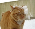 This Cat Got Hit By A Snow Ball