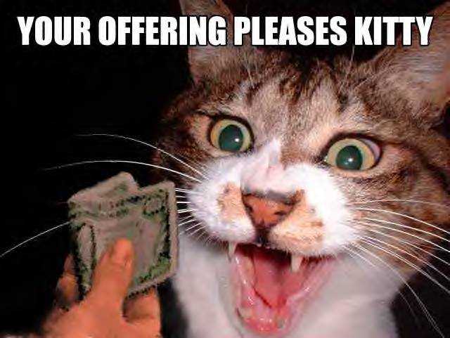 Funny Cats Pics. Monthly Salary - Funny Cats