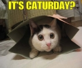 it's caturday