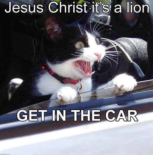 pictures of funny cats. Cat Scared By A Lion - Funny
