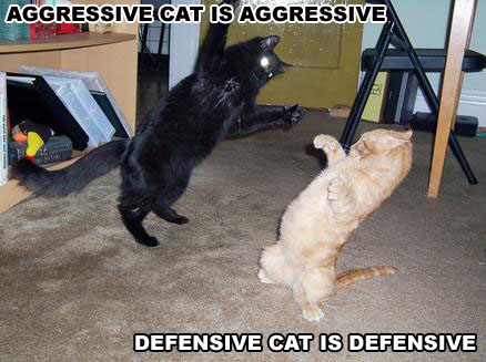 pictures of funny cats. Fighting Cats - Funny Cats