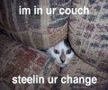 Cat In Couch