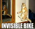 Cat On Invisible Bike