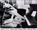 Pianist Dogs