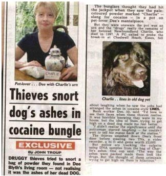 Thieves Snort Dogs Ashes In Cocaine Bungle
