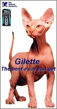 Gilette   The Best A Cat Can Get