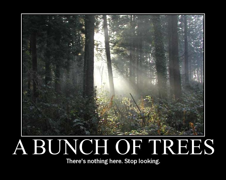 A Bounch Of Trees