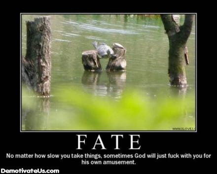 Fate God Hates You Turtle