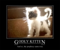 Normal Godly Kitten