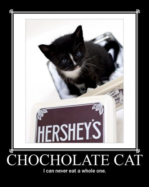 Normal Chocolate Cat