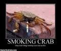 Smoking Crab Bull Riding Monkey