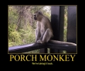 Porch Monkey