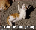 Gravity Vs Cat