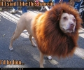 This Dog Looks Like A Lion