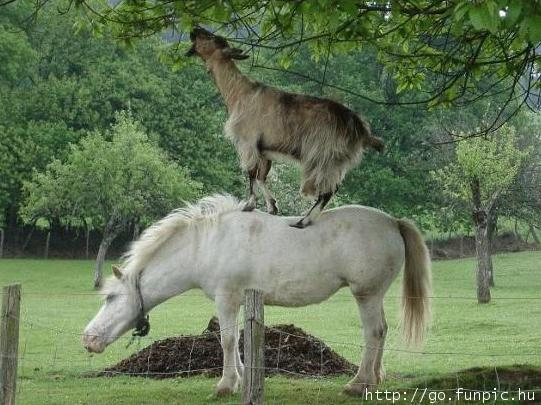 FUNNY PICTURES Horse-ladder