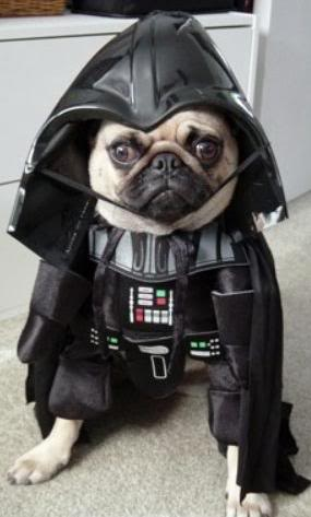 Dark Vader Dog Version