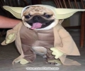 Funny Animals   In Costumes!