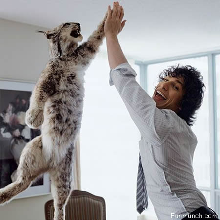 Hi5 Funny Animals