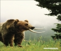 Prehistorical Bear