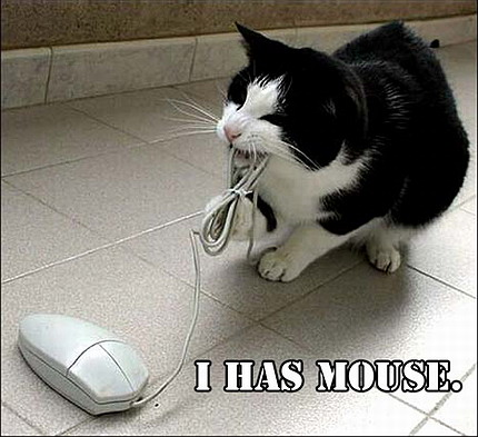 Funny Cat And Computer Mouse