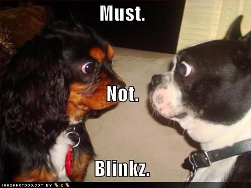 funny dogs. Blinking Contest - Funny Dogs