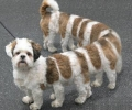 Myriapode Dog