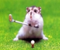 Rat Playing Golf