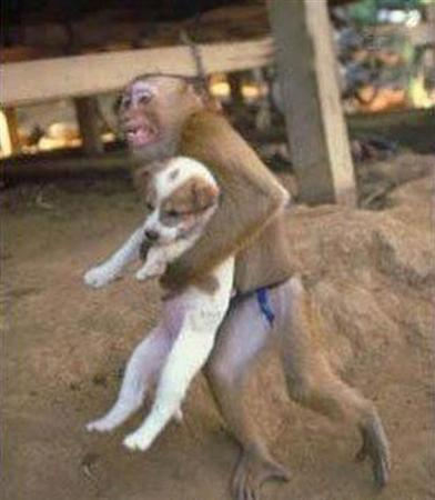 Monkey Saves Dog