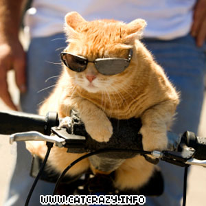 Cool Cat With Glasses