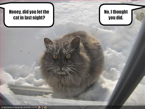funny images of cats. Frozen Cat - Funny Cats Pictures - Funny Pictures