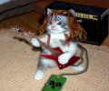 Rock N Rolla Cat